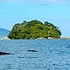 Ilha das laranjeiras